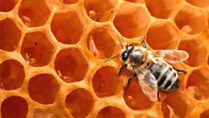Pčelinji proizvodi i proizvodi od meda